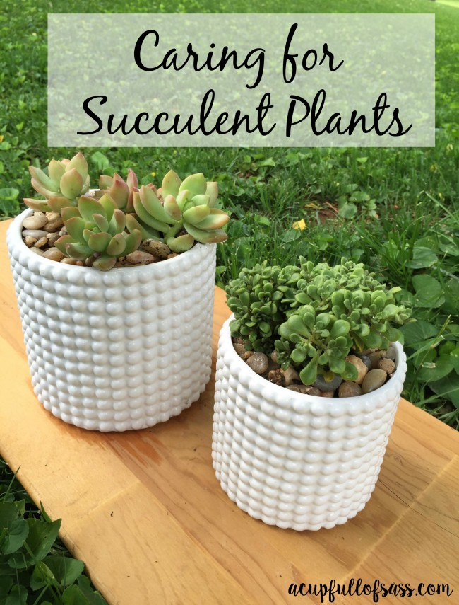 how to care for succulent plants a cup full of sass. Black Bedroom Furniture Sets. Home Design Ideas