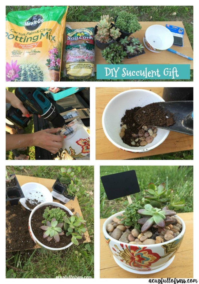 DIY succulent gift Collage