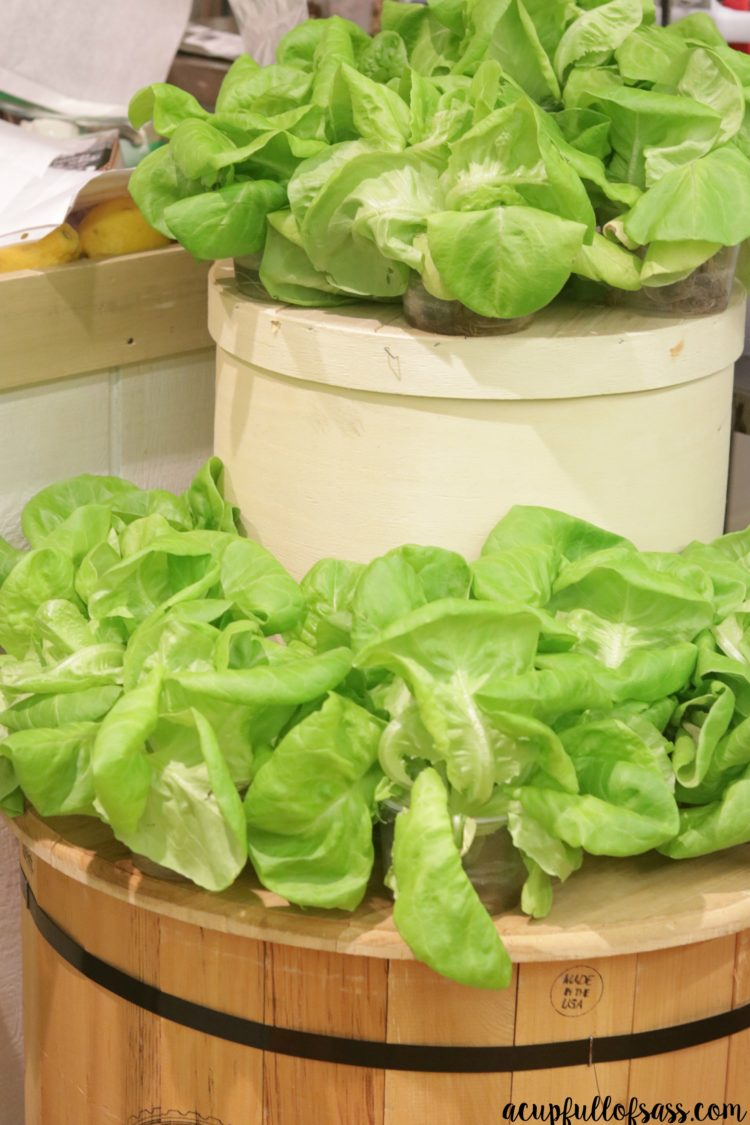 Eckert's Cooking Class Hydroponic Lettuce